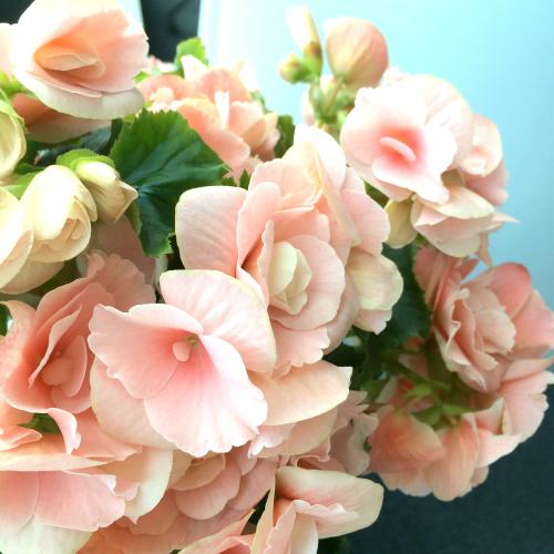母の日ギフト花